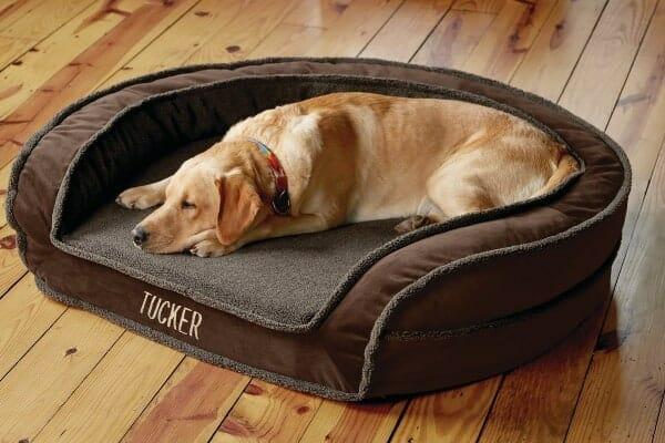 dog lying on orvis memory foam bed