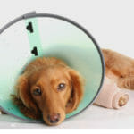 Pain in Dogs: An Expert Interview with Dr. Harvey About the Stress, Fear, and Anxiety of a Painful Dog