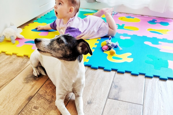 Senior terrier on the floor with baby, photo