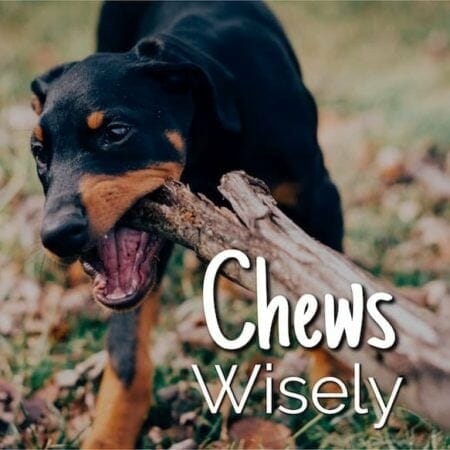 Chews Wisely – Dental Health for Your Dog