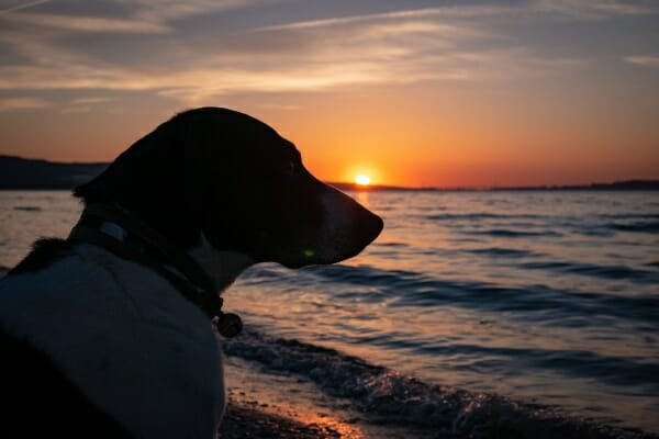 silhouette of dog at the beach at sunset, photo