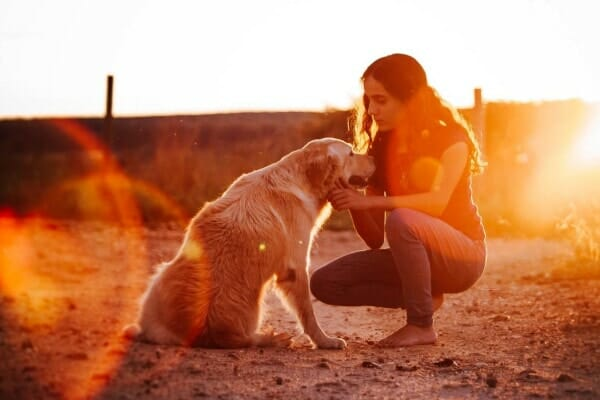 dog mom talking to old golden retriever at sunset as if preparing for  dog's euthanasia, photo