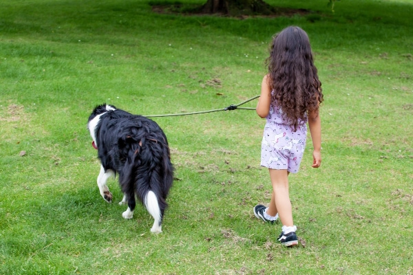 Dog walking away as example of proprioception in dogs, photo