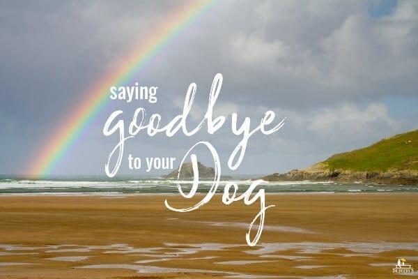 dog euthanasia photo of rainbow and title saying goodbye to your dog