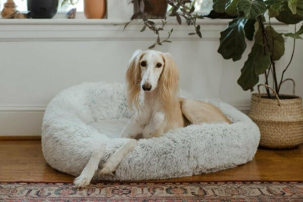 dog laying in comfy bed, photo