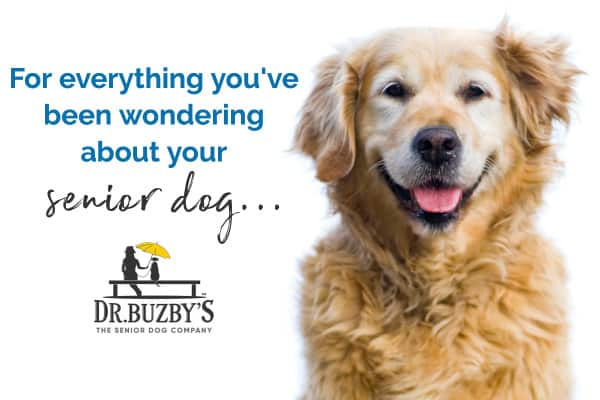 Happy senior dog and message for everything you want to know about senior dogs, dr buzby's logo