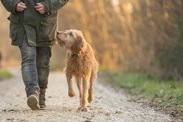 Dog on a walk with its owner, photo