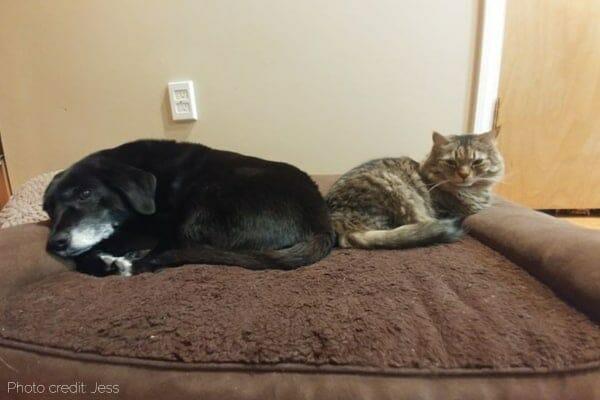 photo elderly dog with stenosis sleeping next to cat