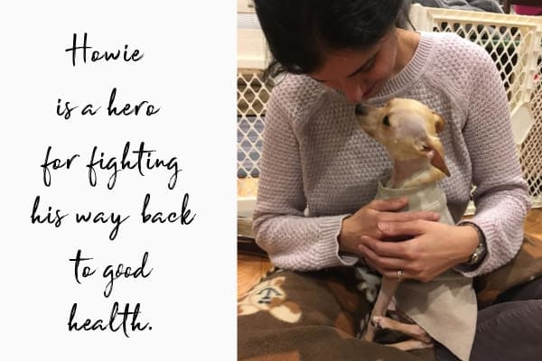 mom holding dog after fighting back from a stomach tear and severe signs of pain in dogs image