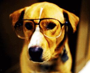 Doggy Eyewear
