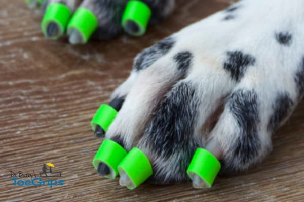 Dog wearing green toe grips, photo