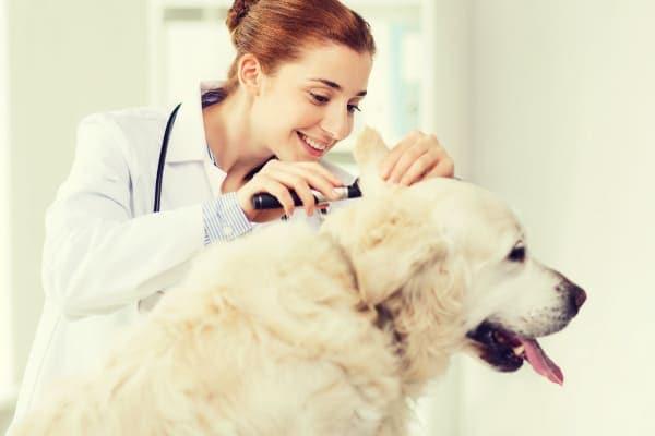 Vet examining a dog, photo