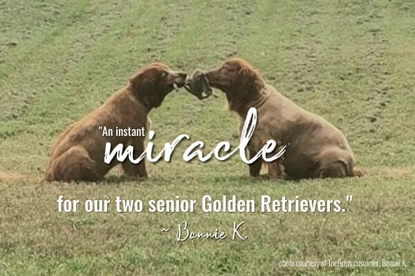 two golden retrievers and title Toe Grips an instant miracle