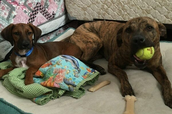 two dogs with toys