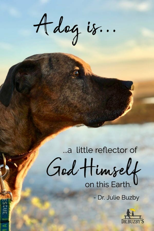 """dog looking at sunset and quote by Dr. Julie Buzby that says """"A dog is a little reflector of God Himself on Earth."""