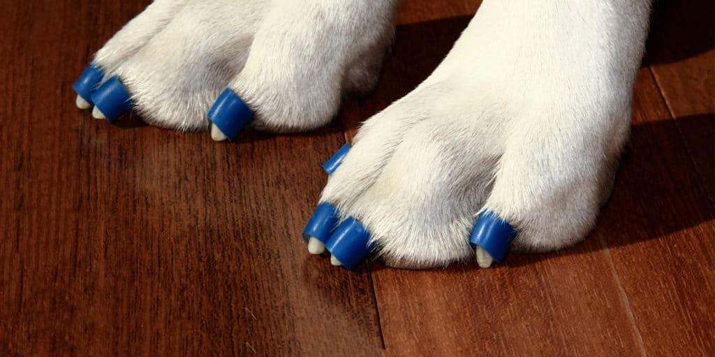 Dr. Buzby's toegrips for dogs